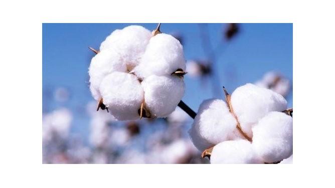 疫情冲击中国纺织外贸行业,智能纺织改造显身手!